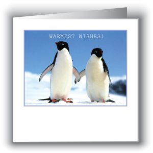 Christmas Wildlife Cards
