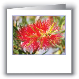 Christmas Wildflower Cards