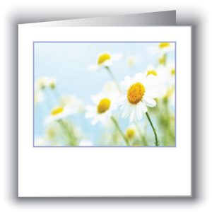 Birthday Floral Cards
